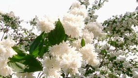 Las flores hermosas son flor almacen de video