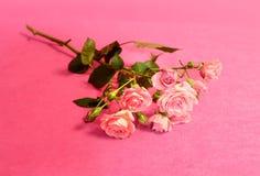 Las flores hermosas subieron Fotografía de archivo