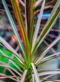 Las flores hermosas y coloridas Fotos de archivo