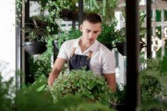 Las flores jovenes atractivas del invernadero del café del delantal del muchacho diseñan la porción interior muchos diversos flor fotografía de archivo