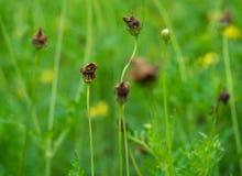 Las flores marchitan en jardín verde imágenes de archivo libres de regalías