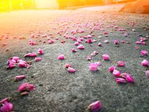 Las flores mexicanas de la enredadera caen abajo en el camino Imágenes de archivo libres de regalías