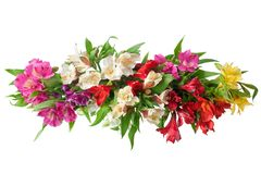 Las flores multicoloras del alstroemeria ramifican en cierre aislado el fondo blanco para arriba imagen de archivo libre de regalías