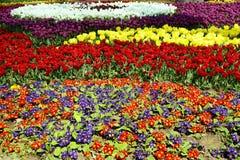 Las flores multicoloras florecieron Primavera en parque Fotos de archivo libres de regalías