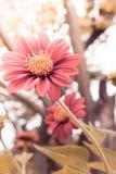 Las flores por la mañana calientan la luz imagenes de archivo