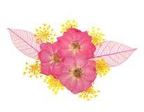 Las flores presionadas - se levantó y la flor del cordón Foto de archivo libre de regalías