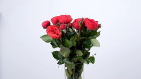 Las flores, ramo, rotación en el fondo blanco, composición floral consisten en Burdeos pión-formado las rosas metrajes