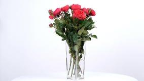 Las flores, ramo, rotación en el fondo blanco, composición floral consisten en el eucalipto, cineraria, tolerancia poner crema de almacen de metraje de vídeo
