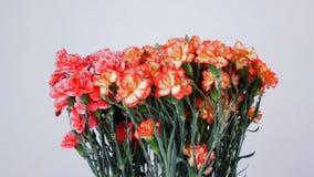 Las flores, ramo, rotación en el fondo blanco, composición floral consisten en turco amarillo, anaranjado y rosado brillante almacen de metraje de vídeo