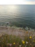 Las flores resuelven el mar Fotografía de archivo