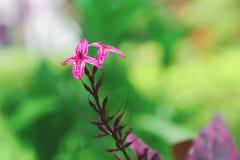 Las flores rojas bajan al extremo del ramo foto de archivo