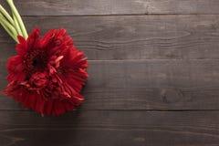 Las flores rojas del gerbera están en el fondo de madera Fotografía de archivo libre de regalías