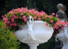 Las flores rojas en un viejo blanco adornaron el pote de la planta Imagen de archivo