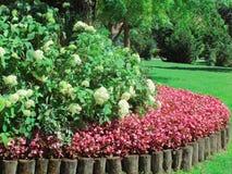 Las flores rojas y blancas adentro aGarden el ajuste Imagen de archivo