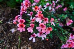 Las flores rosadas del jardín botánico imágenes de archivo libres de regalías