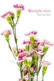 Las flores rosadas en el fondo blanco con la muestra mandan un SMS Fotografía de archivo