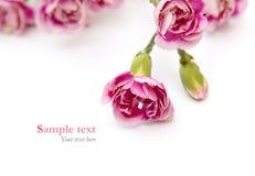 Las flores rosadas en el fondo blanco con la muestra mandan un SMS (el estilo mínimo) Foto de archivo libre de regalías