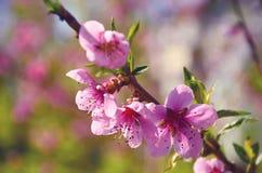 Las flores rosadas se cierran para arriba Foto de archivo libre de regalías