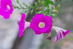 Las flores rosadas se cierran para arriba en fondo de la naturaleza Fotografía de archivo