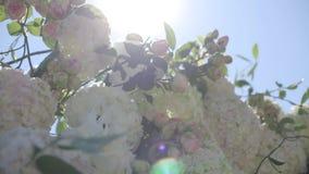 Las flores rosadas se sacuden en el viento y el verde se va en un día soleado almacen de video