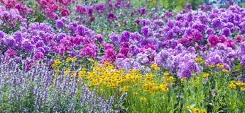 Las flores salvajes Fotografía de archivo libre de regalías