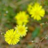 Las flores salvajes Foto de archivo
