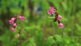 Las flores salvajes brillantes con descensos de la mañana rocían almacen de metraje de vídeo