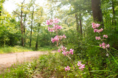 Las flores salvajes crecen en el corazón de la naturaleza Imágenes de archivo libres de regalías