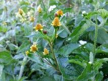 Las flores salvajes de la naturaleza foto de archivo