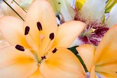 Las flores se cierran para arriba Imagenes de archivo
