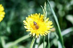 Las flores son amarillas y brillantes Imagen de archivo libre de regalías