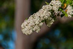 Las flores son la muestra de la primavera Foto de archivo libre de regalías