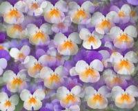 Las flores tienen gusto de mariposas Foto de archivo