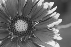 Las flores tiraron en un estilo de la bella arte en un estudio Fotos de archivo libres de regalías