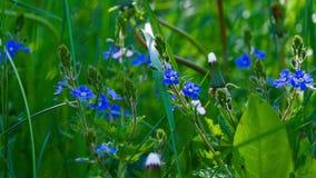 Las flores violetas florecieron a principios de verano almacen de video