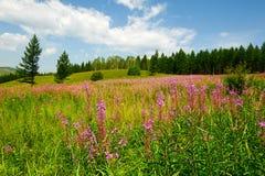 Las flores y el cloudscape Fotografía de archivo