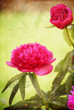 Las flores y el dragón hermosos de la peonía vuelan adornos con citas Fotografía de archivo libre de regalías