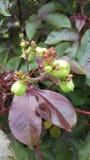 Las flores y la fruta saludan calidad Fotografía de archivo libre de regalías
