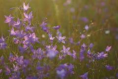 Las flores y la hierba se encendieron por iluminado por el sol caliente en un prado del verano, fondos naturales del extracto par Imágenes de archivo libres de regalías