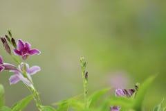 Las flores y las hojas del verde empañaron el fondo Imagen de archivo libre de regalías