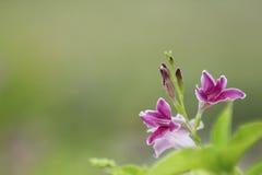 Las flores y las hojas del verde empañaron el fondo Fotos de archivo libres de regalías