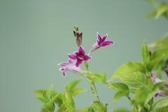 Las flores y las hojas del verde empañaron el fondo Imagen de archivo