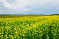 Las flores y las nubes de oro Imagen de archivo libre de regalías