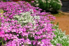 Las flores y las plantas están floreciendo Imagenes de archivo