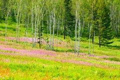 Las flores y los árboles del rosa Imagen de archivo