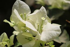Las flores y los brotes hacen el marco fotos de archivo libres de regalías
