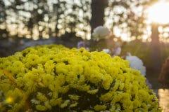 Las flores y los candels se encendieron durante todos los santos noche o Halloween en el cementerio europeo imagenes de archivo