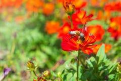 Las flores y los insectos del rojo en el parque Foto de archivo libre de regalías