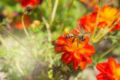 Las flores y los insectos del rojo en el parque Fotos de archivo libres de regalías