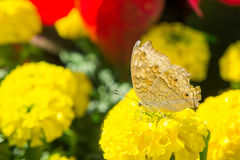 Las flores y los insectos en el parque Imagenes de archivo